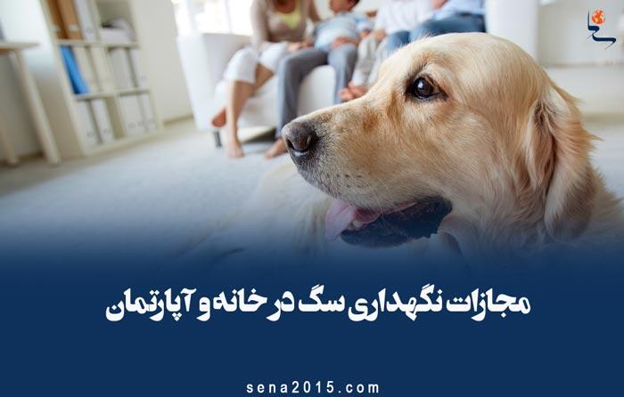 مجازات نگهداری سگ در خانه و آپارتمان از دیدگاه اسلام و قانون مجازات