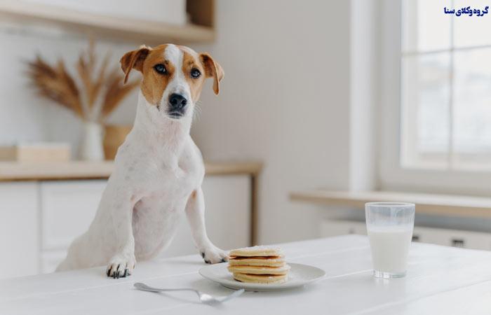 نگهداری حیوانات به خصوص سگ در آپارتمان