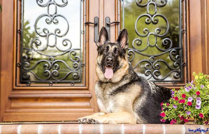 وجود سگ نگهبان برای پاسبانی