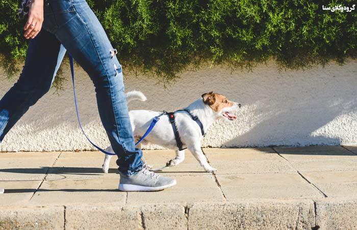 سگ گردانی در شهر